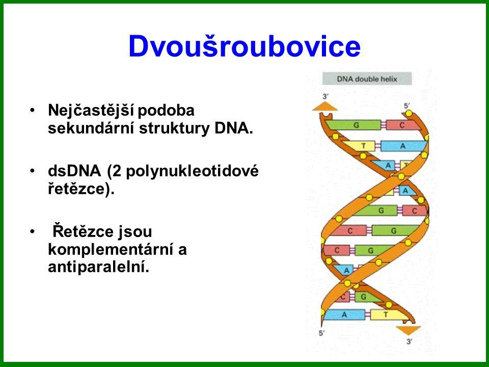 Dvoušroubovice Nejčastější podoba sekundární struktury DNA.