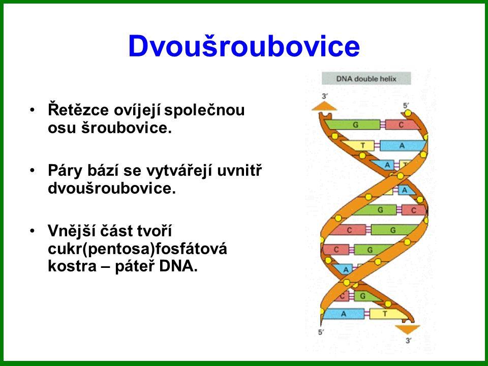 Dvoušroubovice Řetězce ovíjejí společnou osu šroubovice.
