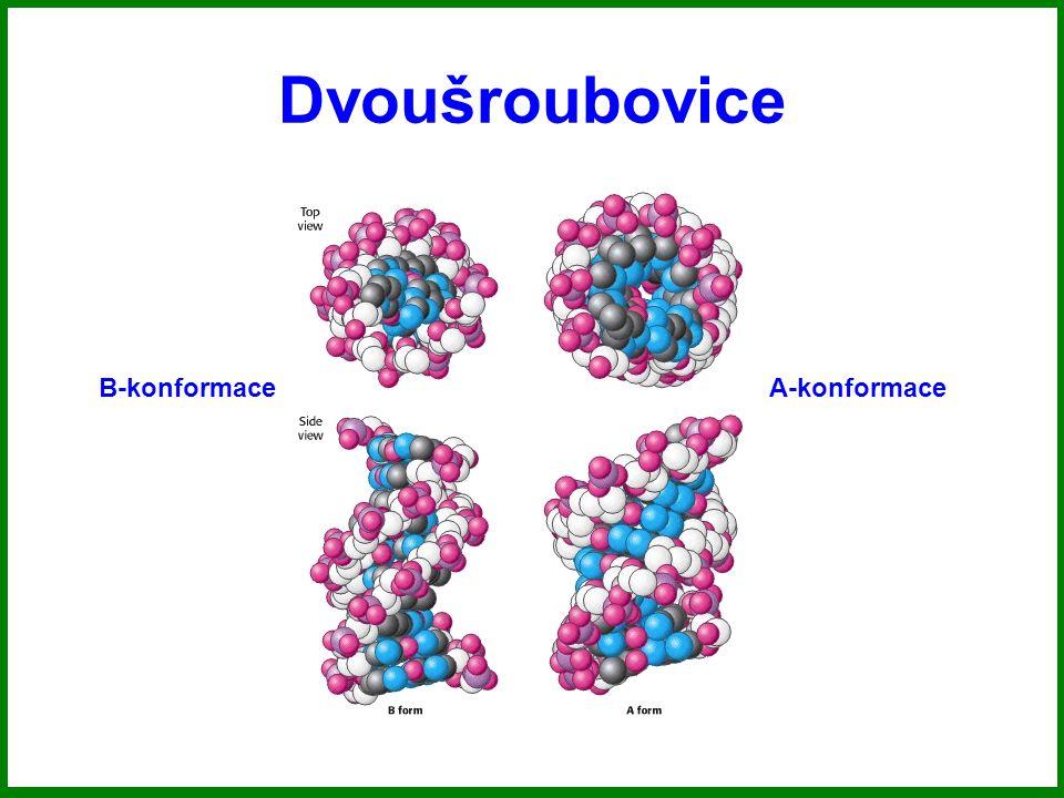 Dvoušroubovice B-konformaceA-konformace
