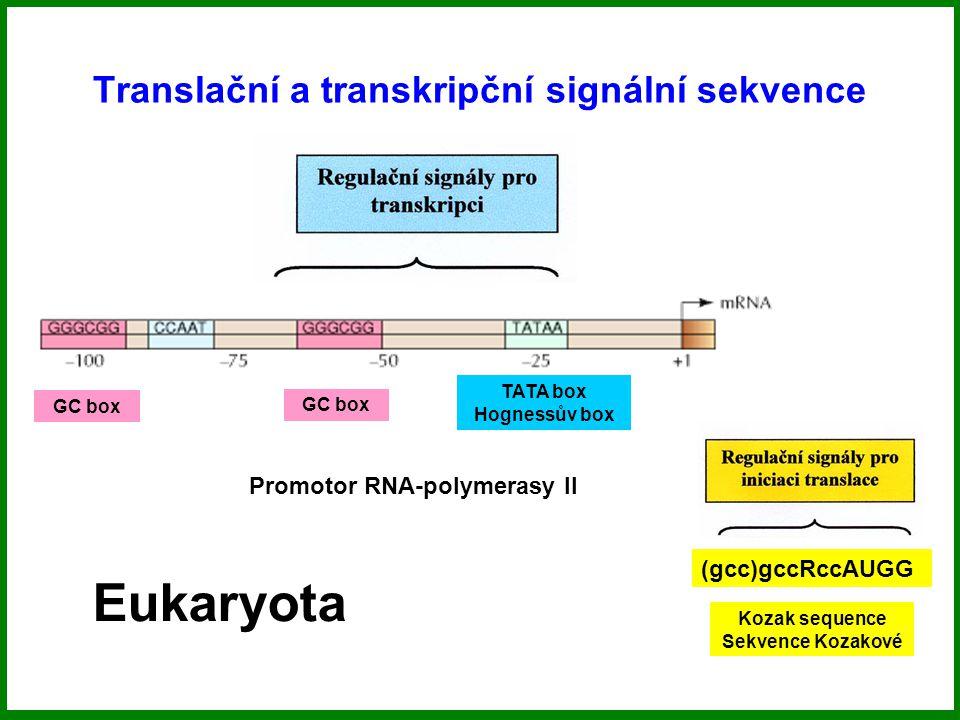 Translační a transkripční signální sekvence Eukaryota TATA box Hognessův box GC box (gcc)gccRccAUGG Kozak sequence Sekvence Kozakové Promotor RNA-polymerasy II