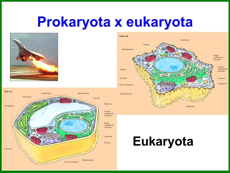 Prokaryota x eukaryota Eukaryota
