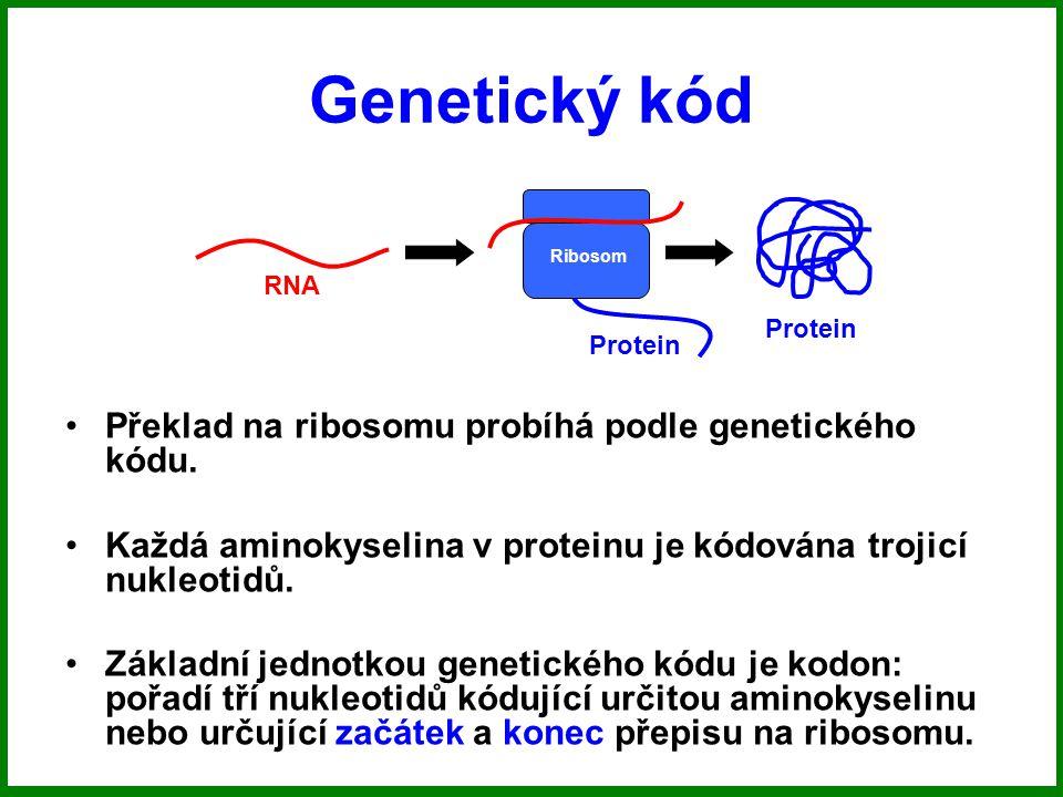 Genetický kód RNA Ribosom Protein Překlad na ribosomu probíhá podle genetického kódu.