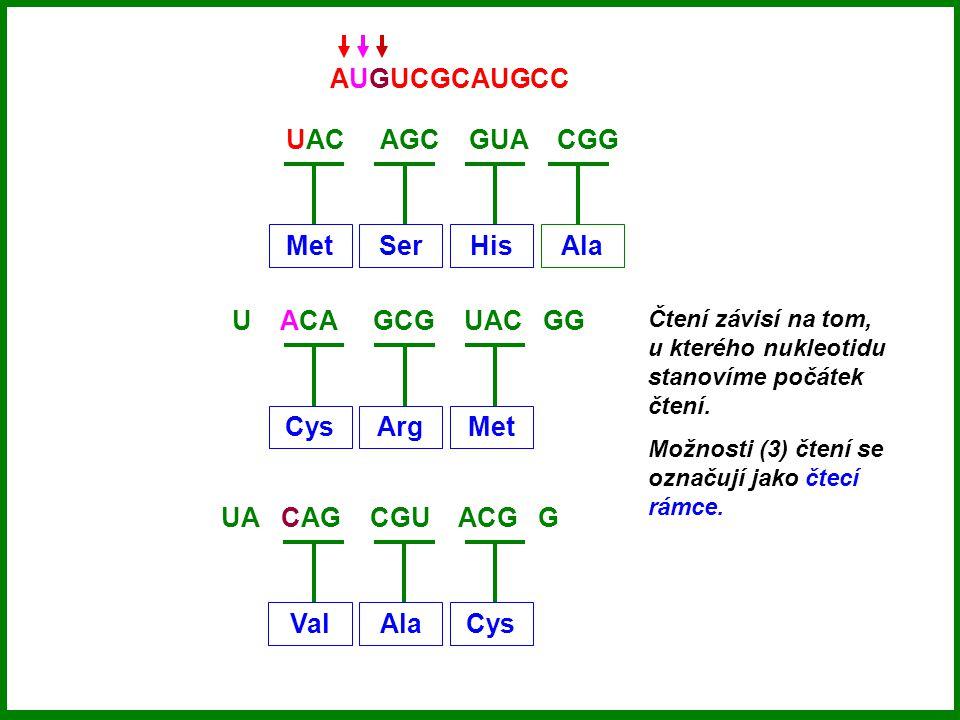 UAC AGC GUA CGG MetSerHisAla AUGUCGCAUGCC U ACA GCG UAC GG CysArgMet UA CAG CGU ACG G ValAlaCys Čtení závisí na tom, u kterého nukleotidu stanovíme počátek čtení.