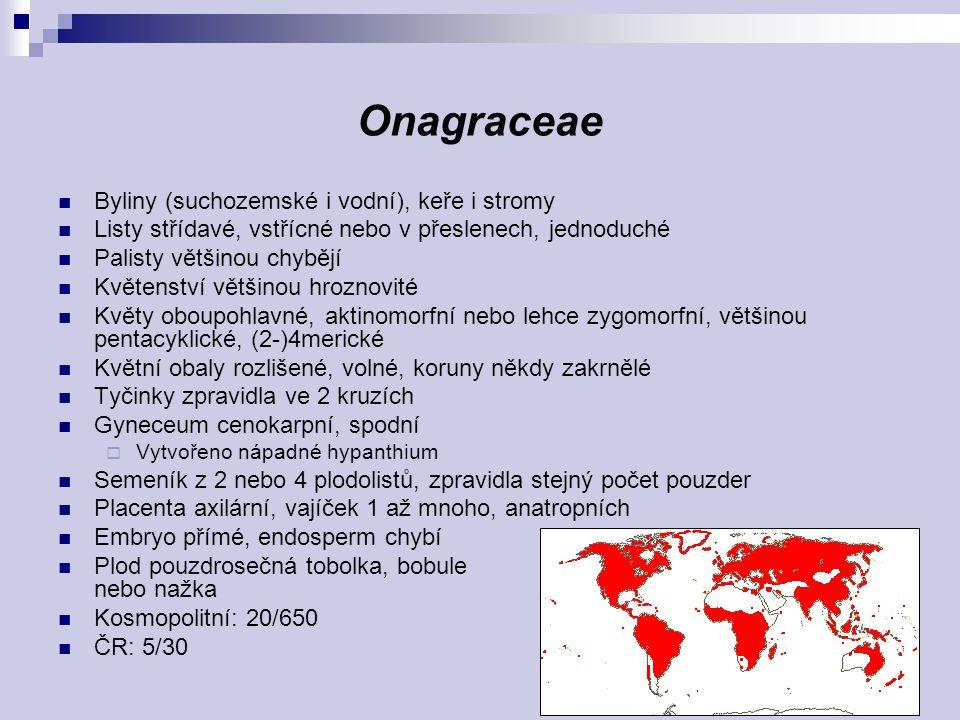 Onagraceae Byliny (suchozemské i vodní), keře i stromy Listy střídavé, vstřícné nebo v přeslenech, jednoduché Palisty většinou chybějí Květenství větš