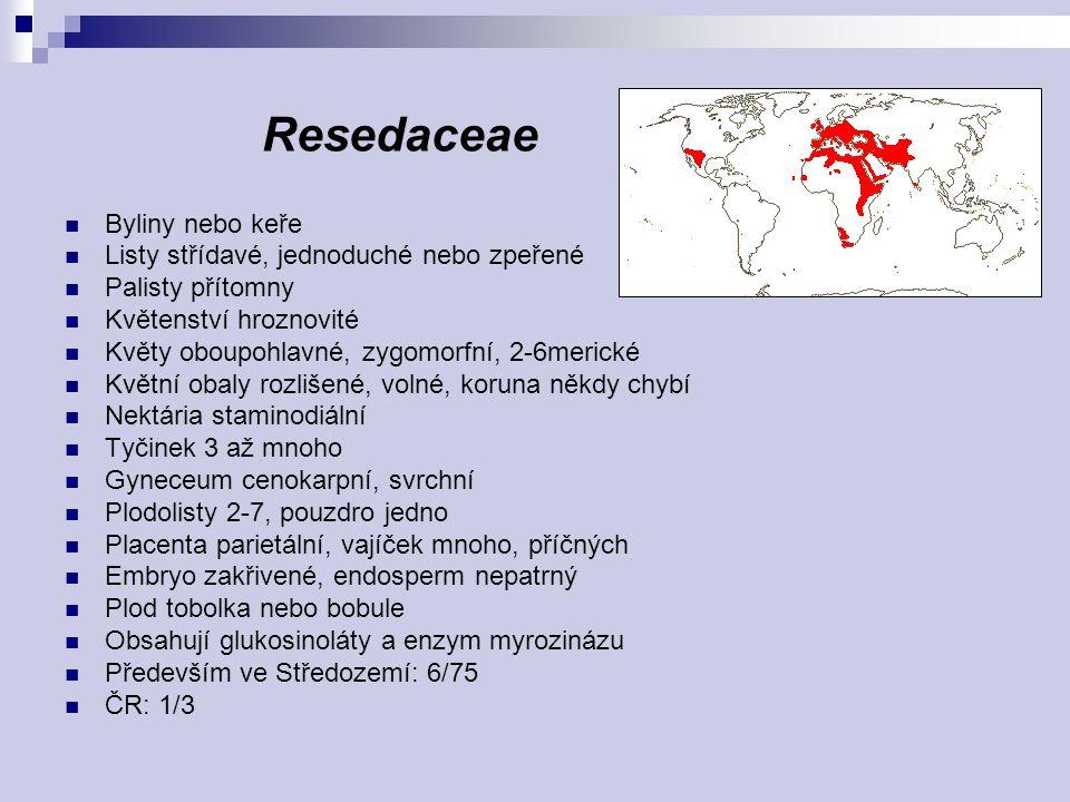 Resedaceae Byliny nebo keře Listy střídavé, jednoduché nebo zpeřené Palisty přítomny Květenství hroznovité Květy oboupohlavné, zygomorfní, 2-6merické