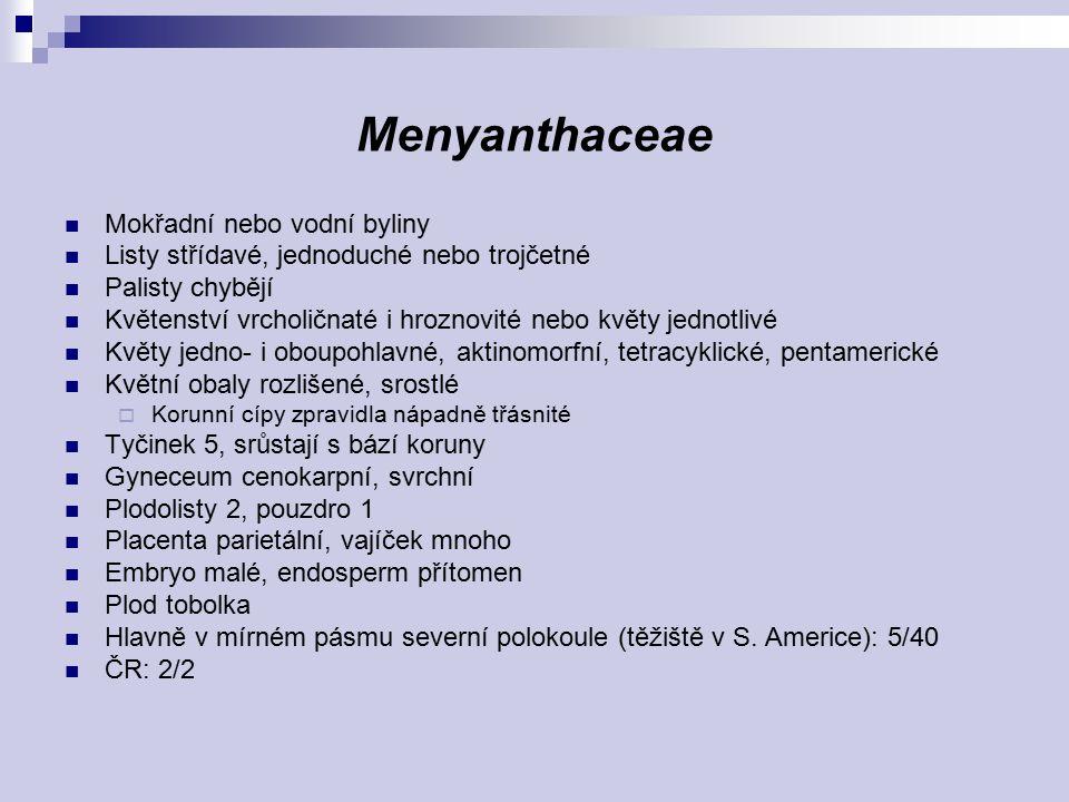 Menyanthaceae Mokřadní nebo vodní byliny Listy střídavé, jednoduché nebo trojčetné Palisty chybějí Květenství vrcholičnaté i hroznovité nebo květy jed