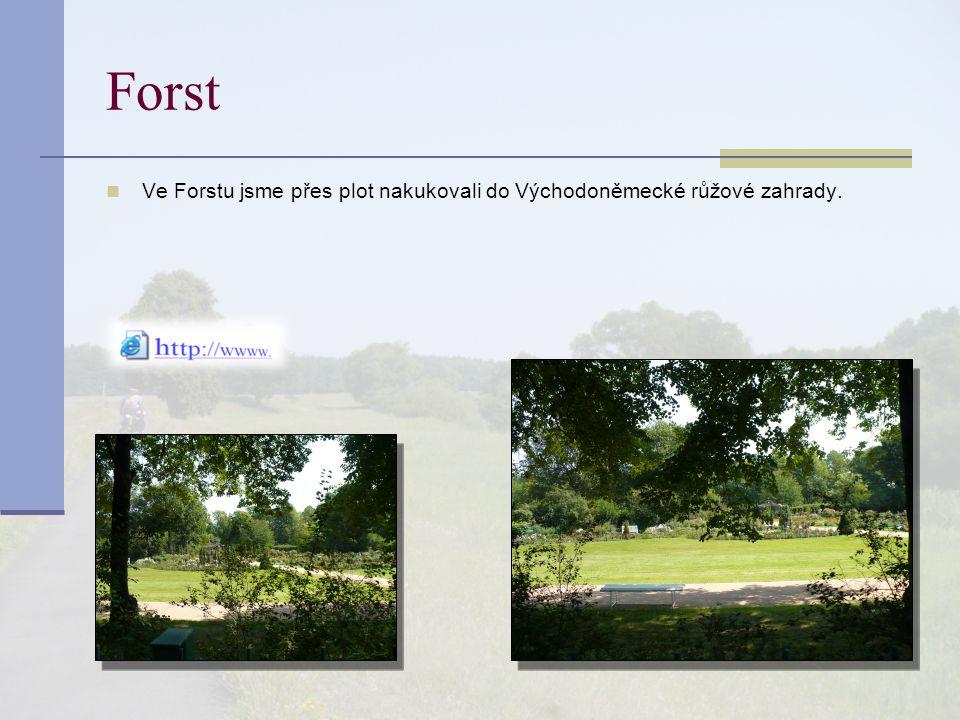 Forst Ve Forstu jsme přes plot nakukovali do Východoněmecké růžové zahrady.