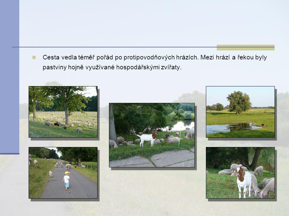 Cesta vedla téměř pořád po protipovodňových hrázích. Mezi hrází a řekou byly pastviny hojně využívané hospodářskými zvířaty.