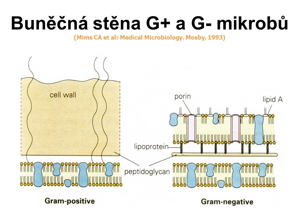 Terapeutické koncentrace antibiotika a vztah k MIC in vitro: MIC ATB je měřítkem jeho vnitřní aktivity proti danému patogenu in vitro in vivo: in vivo je klinická účinnost ATB ovlivněna farmakokonetikou (PK) a farmakodynamikou (PD) a odpovědí makroorganismu PK se vztahuje k absorbci, distribuci a eliminaci léčiva, proto určuje časový průběh koncentrací léčiva ve tkáních a těl.