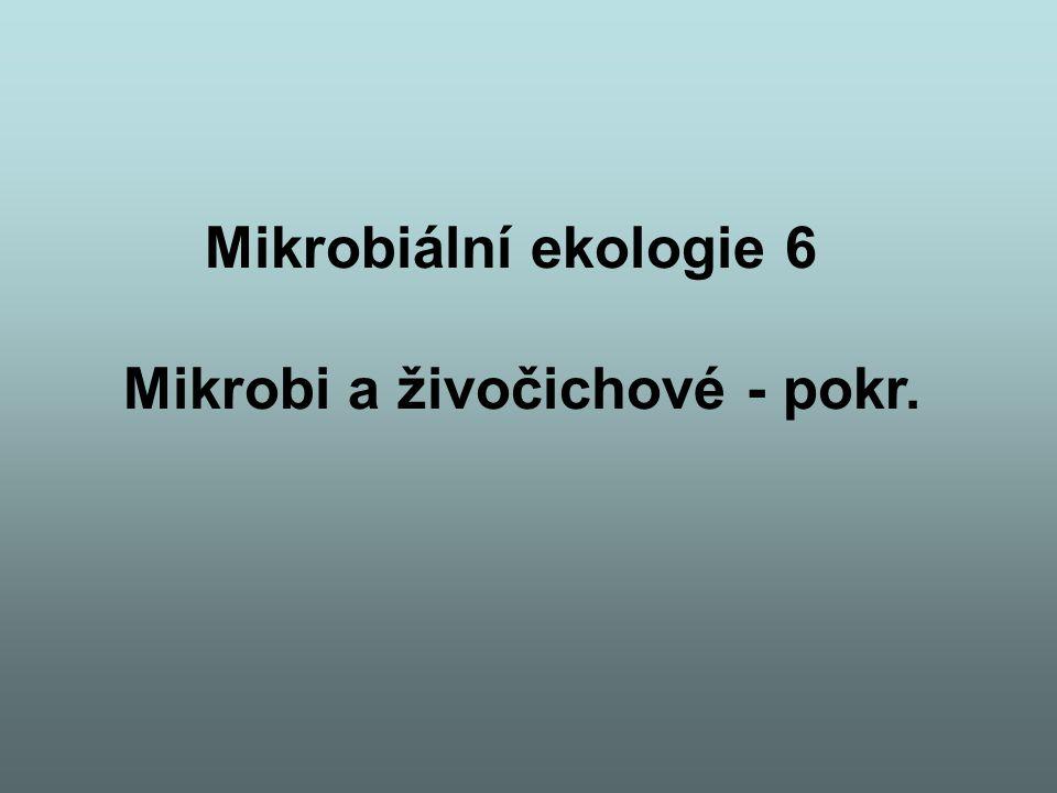 Mikrobiální ekologie 6 Mikrobi a živočichové - pokr.