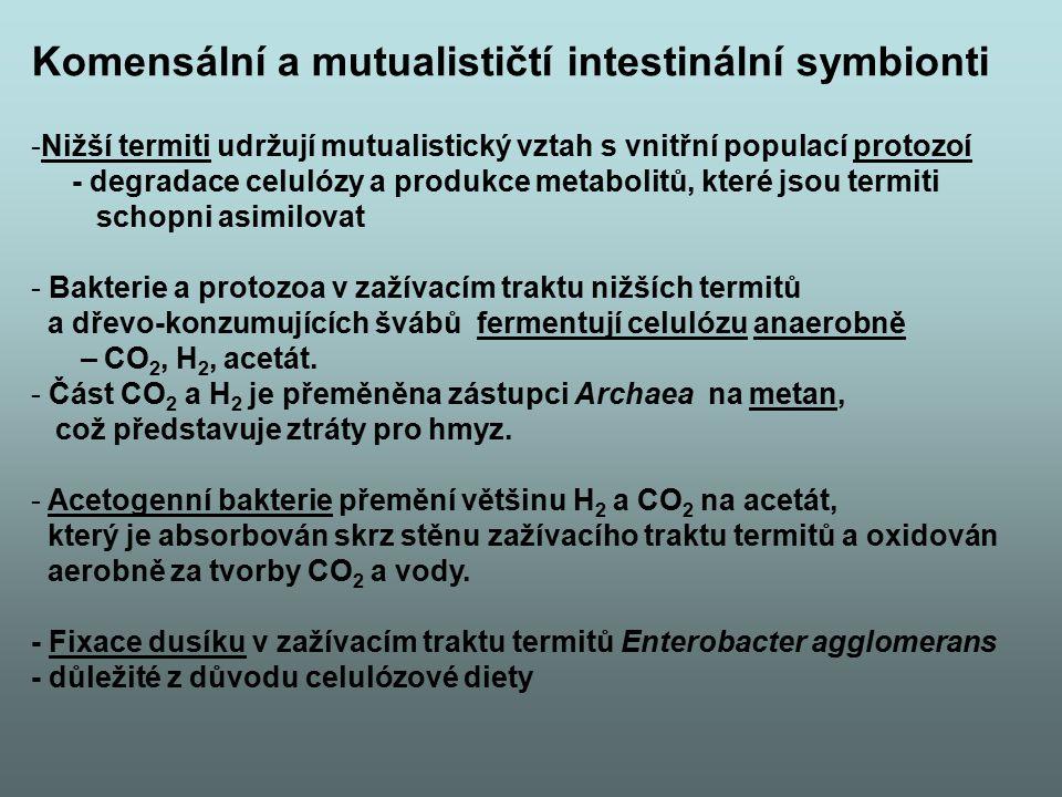 Komensální a mutualističtí intestinální symbionti -Nižší termiti udržují mutualistický vztah s vnitřní populací protozoí - degradace celulózy a produk