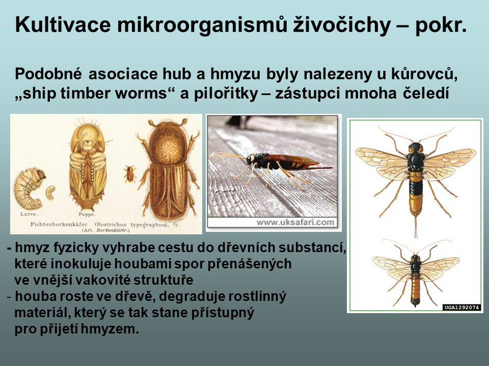 Mixotrophy All protozoans engage in heterotrophy, but not all protozoans are exclusive heterotrophs.heterotrophs Those that combine autotrophy (self-sustaining food production from a carbon sourceautotrophy and inorganic nitrogen) and heterotrophy (ingesting other organisms to acquire carbon) are known as mixotrophs.