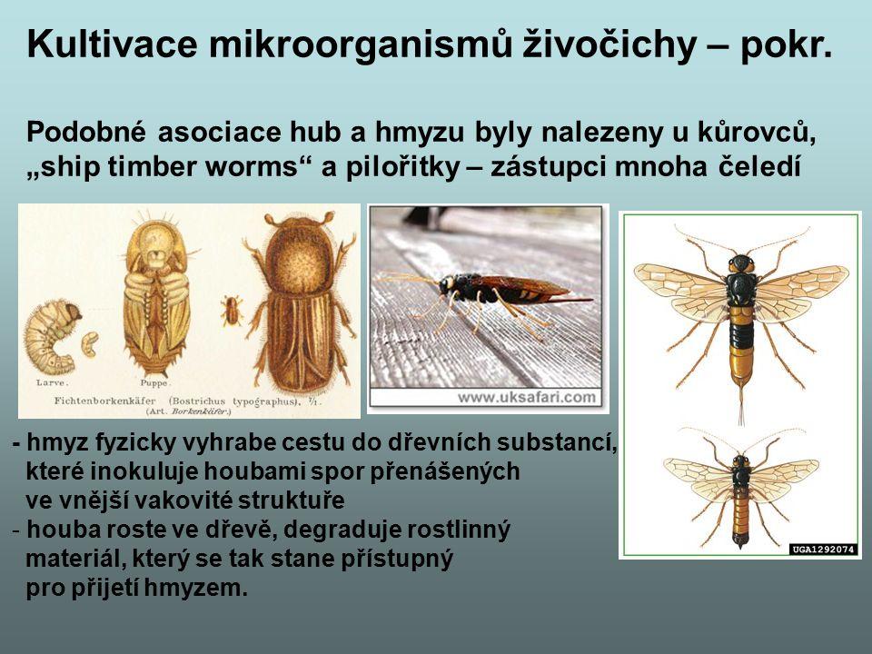 """Kultivace mikroorganismů živočichy – pokr. Podobné asociace hub a hmyzu byly nalezeny u kůrovců, """"ship timber worms"""" a pilořitky – zástupci mnoha čele"""