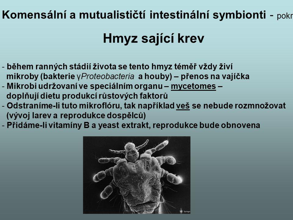 Komensální a mutualističtí intestinální symbionti - pokr Hmyz sající krev - během ranných stádií života se tento hmyz téměř vždy živí mikroby (bakteri