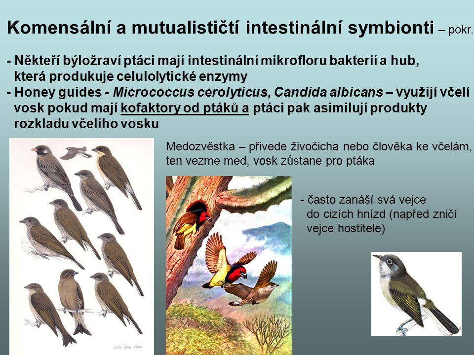 Komensální a mutualističtí intestinální symbionti – pokr. - Někteří býložraví ptáci mají intestinální mikrofloru bakterií a hub, která produkuje celul