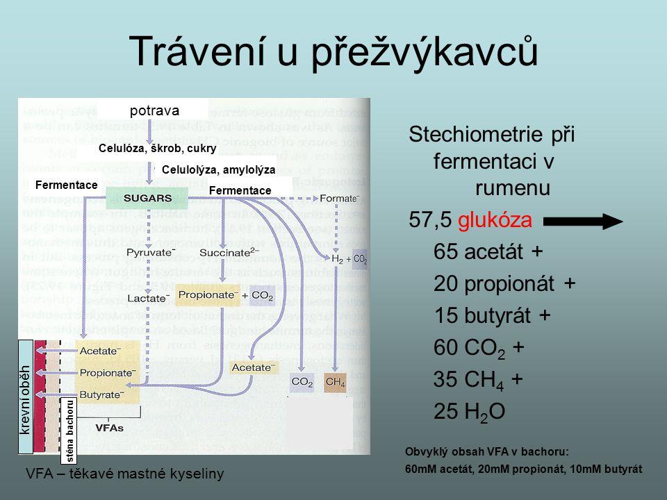 Trávení u přežvýkavců Stechiometrie při fermentaci v rumenu 57,5 glukóza 65 acetát + 20 propionát + 15 butyrát + 60 CO 2 + 35 CH 4 + 25 H 2 O potrava