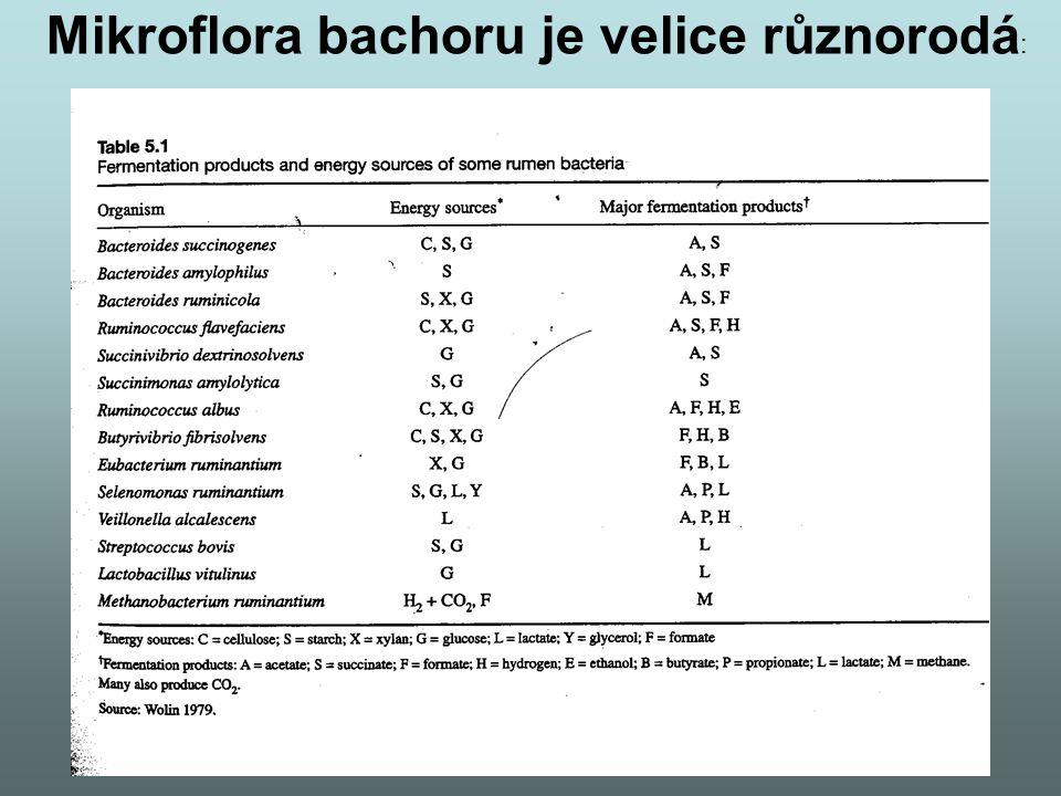 Mikroflora bachoru je velice různorodá :