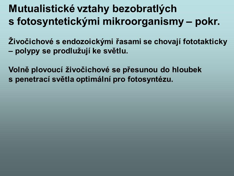 Mutualistické vztahy bezobratlých s fotosyntetickými mikroorganismy – pokr. Živočichové s endozoickými řasami se chovají fototakticky – polypy se prod