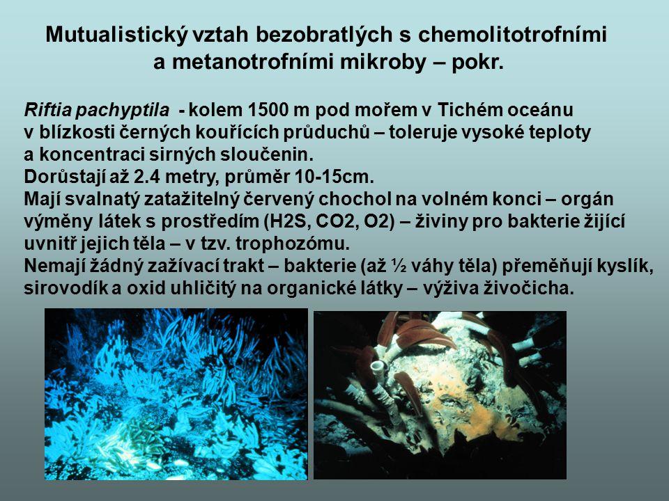 Riftia pachyptila - kolem 1500 m pod mořem v Tichém oceánu v blízkosti černých kouřících průduchů – toleruje vysoké teploty a koncentraci sirných slou