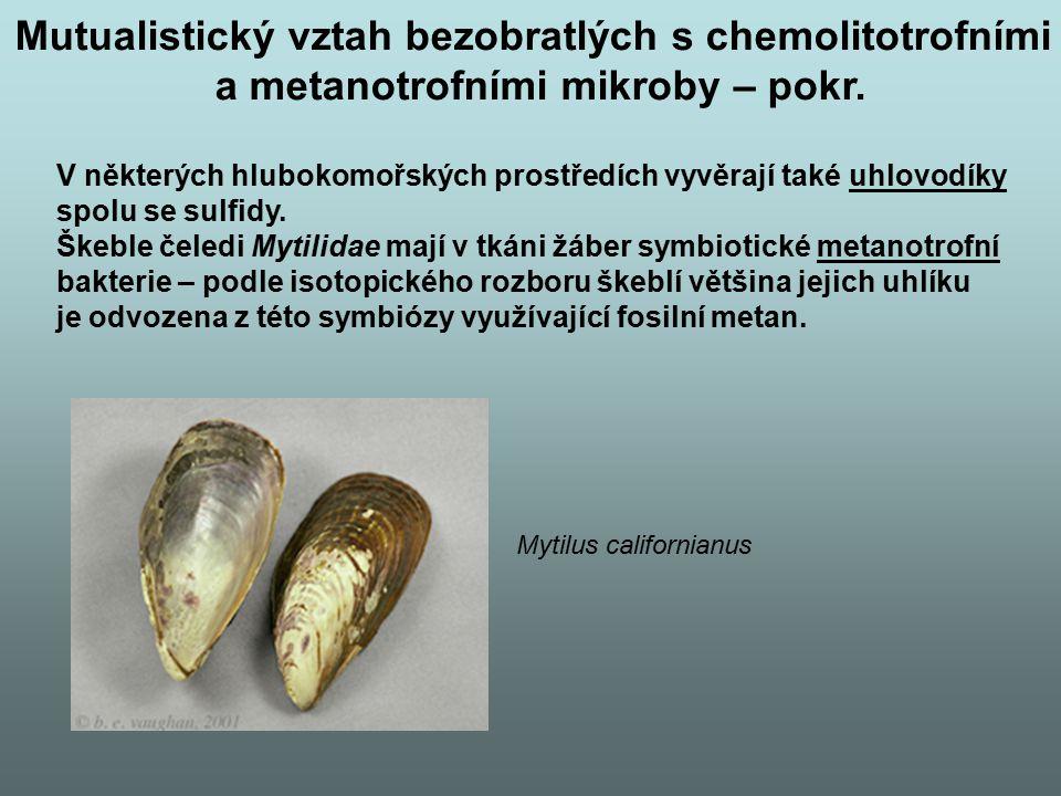V některých hlubokomořských prostředích vyvěrají také uhlovodíky spolu se sulfidy. Škeble čeledi Mytilidae mají v tkáni žáber symbiotické metanotrofní