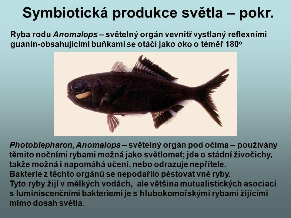Symbiotická produkce světla – pokr. Ryba rodu Anomalops – světelný orgán vevnitř vystlaný reflexními guanin-obsahujícími buňkami se otáčí jako oko o t