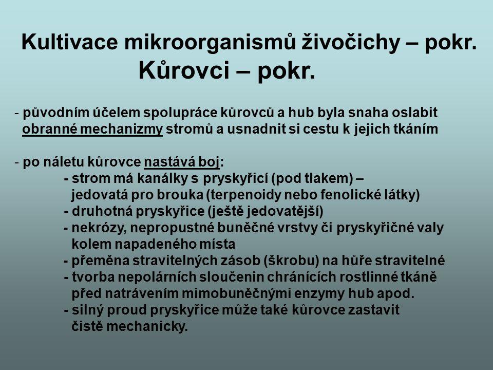 Kultivace mikroorganismů živočichy – pokr. Kůrovci – pokr. - původním účelem spolupráce kůrovců a hub byla snaha oslabit obranné mechanizmy stromů a u