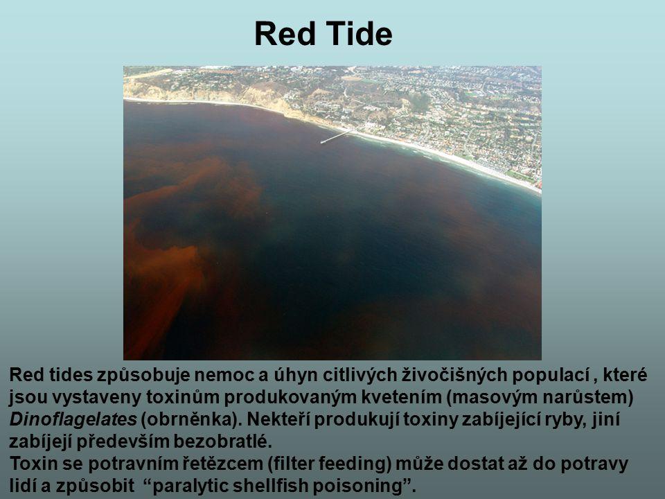 Red Tide Red tides způsobuje nemoc a úhyn citlivých živočišných populací, které jsou vystaveny toxinům produkovaným kvetením (masovým narůstem) Dinofl