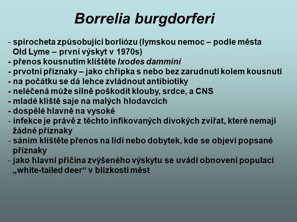 Borrelia burgdorferi - spirocheta způsobující borliózu (lymskou nemoc – podle města Old Lyme – první výskyt v 1970s) - přenos kousnutím klíštěte Ixode