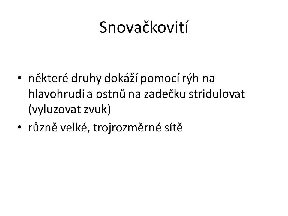 Zdroje www.wikipedia.cz www.cojeco.cz www.pavouci-cz.eu www.google.cz www.youtube.com
