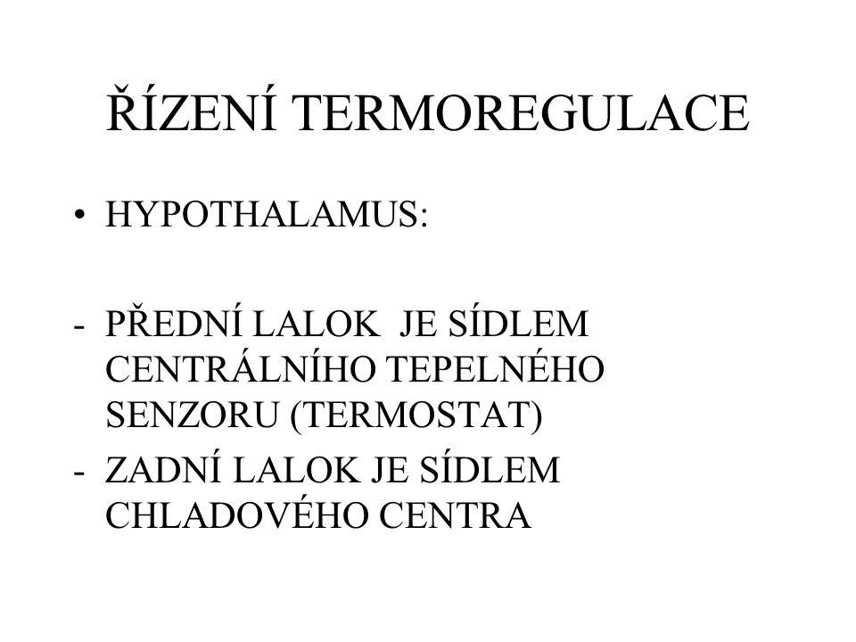 ŘÍZENÍ TERMOREGULACE HYPOTHALAMUS: -PŘEDNÍ LALOK JE SÍDLEM CENTRÁLNÍHO TEPELNÉHO SENZORU (TERMOSTAT) -ZADNÍ LALOK JE SÍDLEM CHLADOVÉHO CENTRA