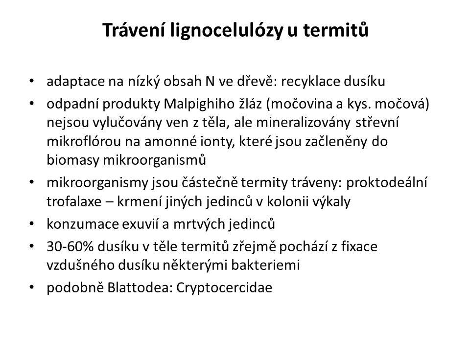 Trávení lignocelulózy u termitů adaptace na nízký obsah N ve dřevě: recyklace dusíku odpadní produkty Malpighiho žláz (močovina a kys. močová) nejsou