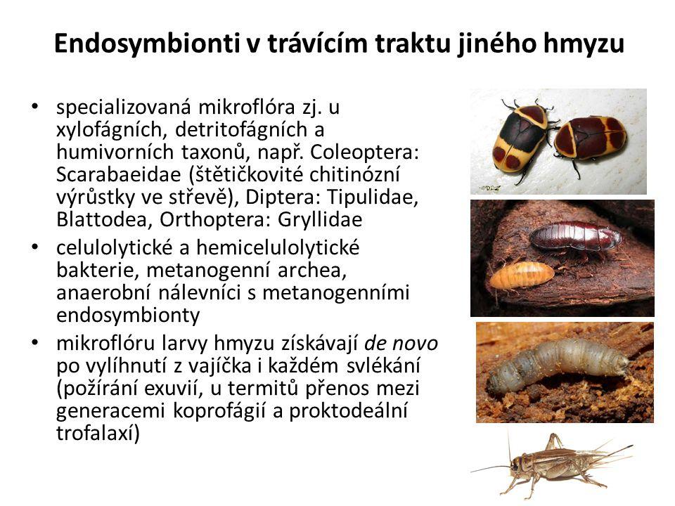 Endosymbionti v trávícím traktu jiného hmyzu specializovaná mikroflóra zj. u xylofágních, detritofágních a humivorních taxonů, např. Coleoptera: Scara