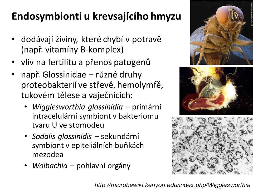 Endosymbionti u krevsajícího hmyzu dodávají živiny, které chybí v potravě (např. vitamíny B-komplex) vliv na fertilitu a přenos patogenů např. Glossin