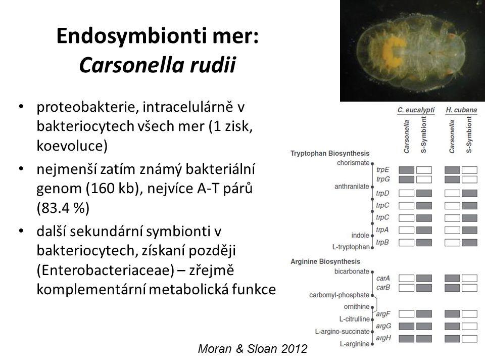 Endosymbionti mer: Carsonella rudii proteobakterie, intracelulárně v bakteriocytech všech mer (1 zisk, koevoluce) nejmenší zatím známý bakteriální gen
