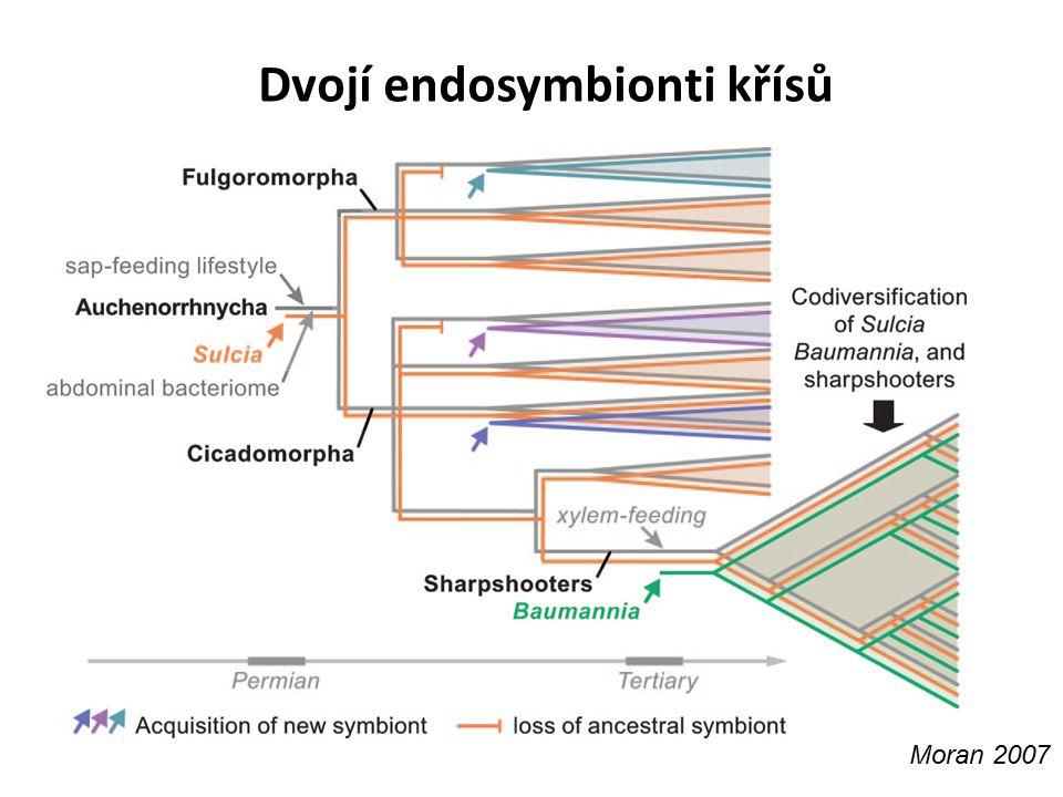 Dvojí endosymbionti křísů Moran 2007
