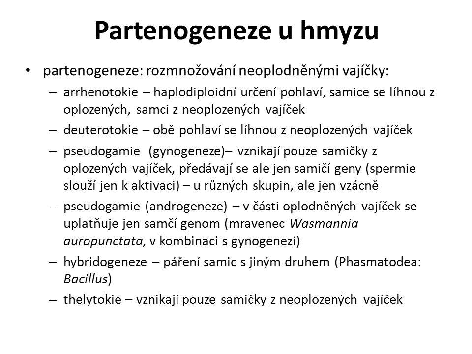Partenogeneze u hmyzu partenogeneze: rozmnožování neoplodněnými vajíčky: – arrhenotokie – haplodiploidní určení pohlaví, samice se líhnou z oplozených