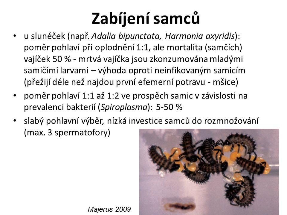 Zabíjení samců u slunéček (např. Adalia bipunctata, Harmonia axyridis): poměr pohlaví při oplodnění 1:1, ale mortalita (samčích) vajíček 50 % - mrtvá