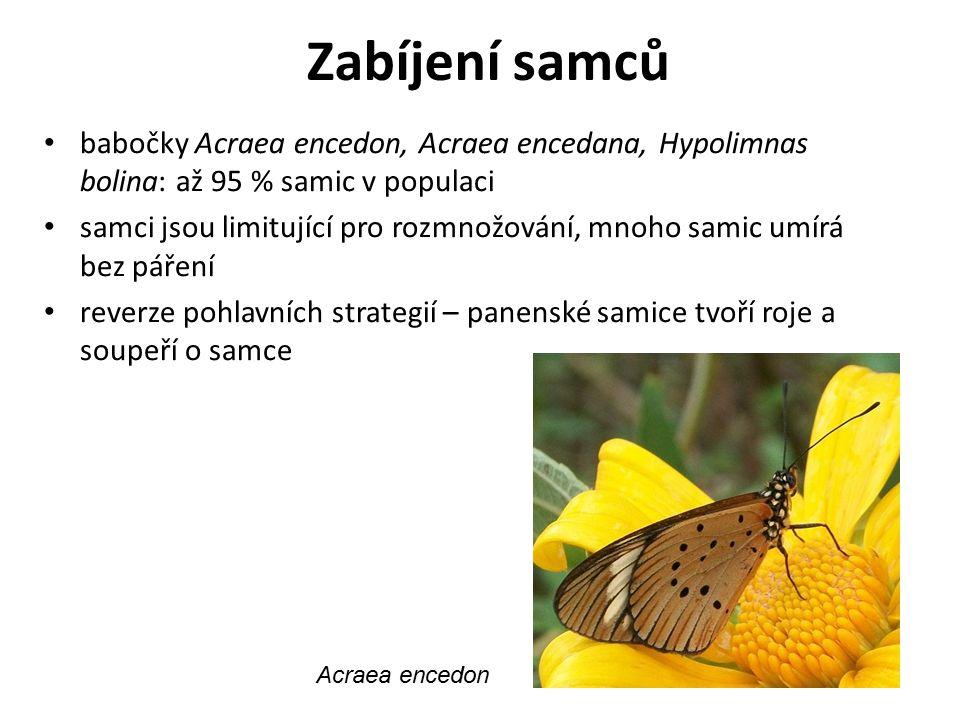 Zabíjení samců babočky Acraea encedon, Acraea encedana, Hypolimnas bolina: až 95 % samic v populaci samci jsou limitující pro rozmnožování, mnoho sami