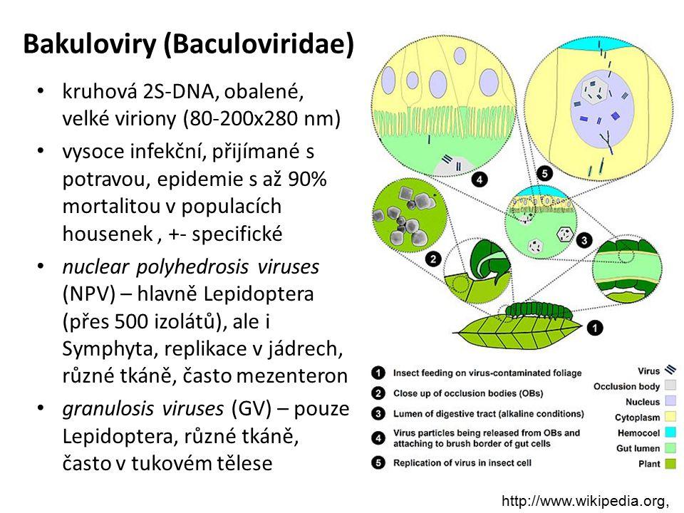 Bakuloviry (Baculoviridae) kruhová 2S-DNA, obalené, velké viriony (80-200x280 nm) vysoce infekční, přijímané s potravou, epidemie s až 90% mortalitou