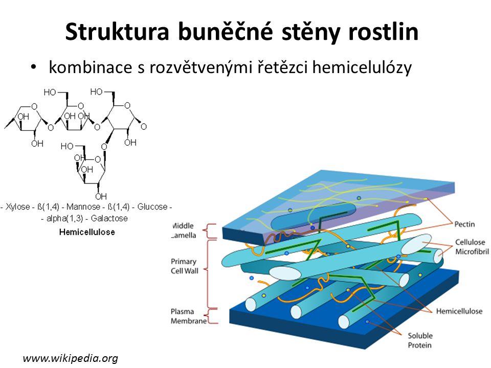 Struktura buněčné stěny rostlin kombinace s rozvětvenými řetězci hemicelulózy www.wikipedia.org