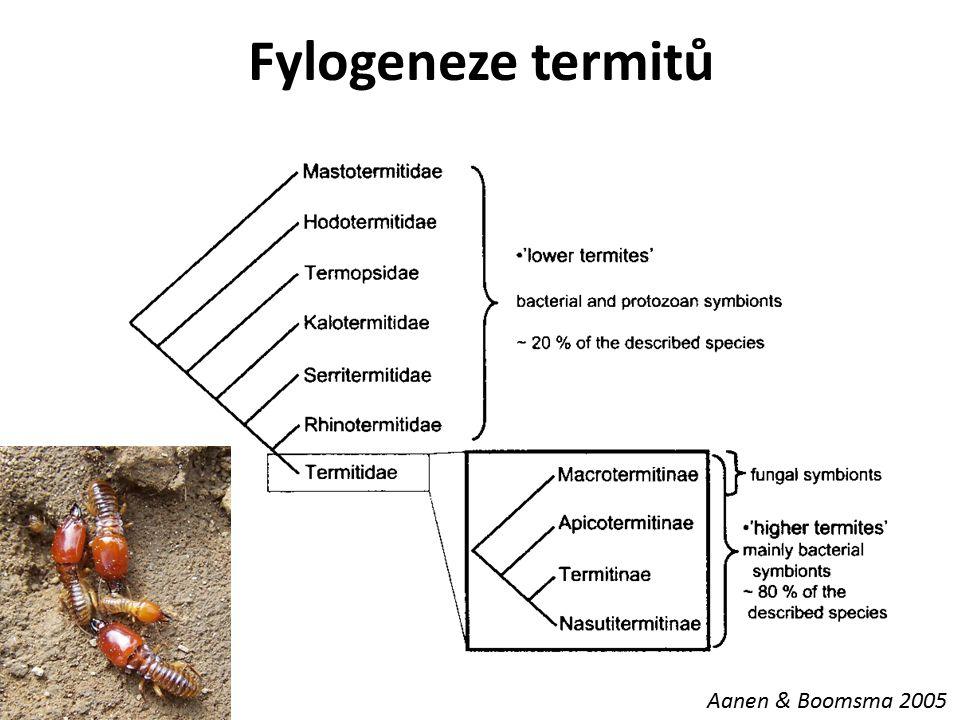 Fylogeneze termitů Aanen & Boomsma 2005