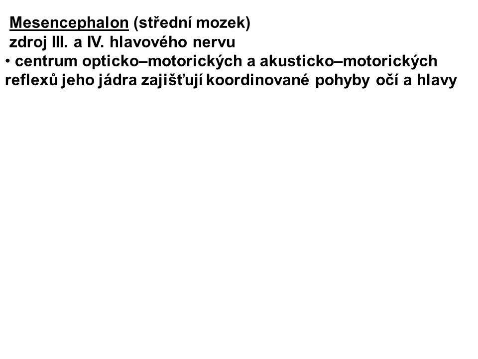 Mesencephalon (střední mozek) zdroj III.a IV.