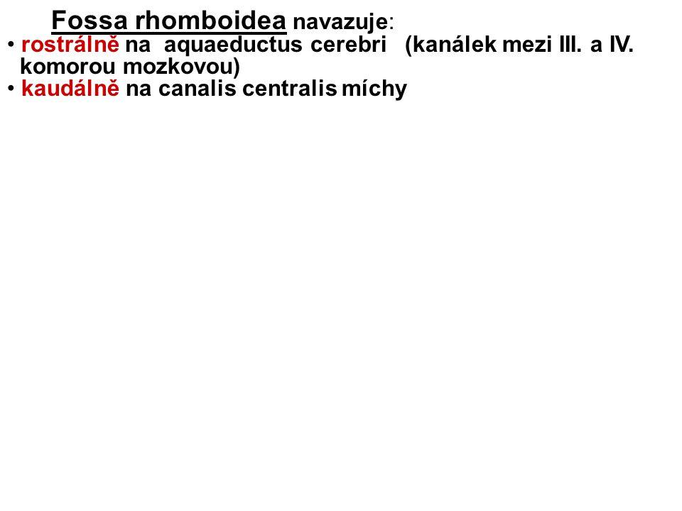 Fossa rhomboidea navazuje: rostrálně na aquaeductus cerebri (kanálek mezi III.