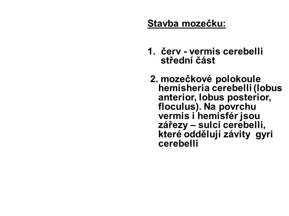 Stavba mozečku: 1.červ - vermis cerebelli střední část 2.