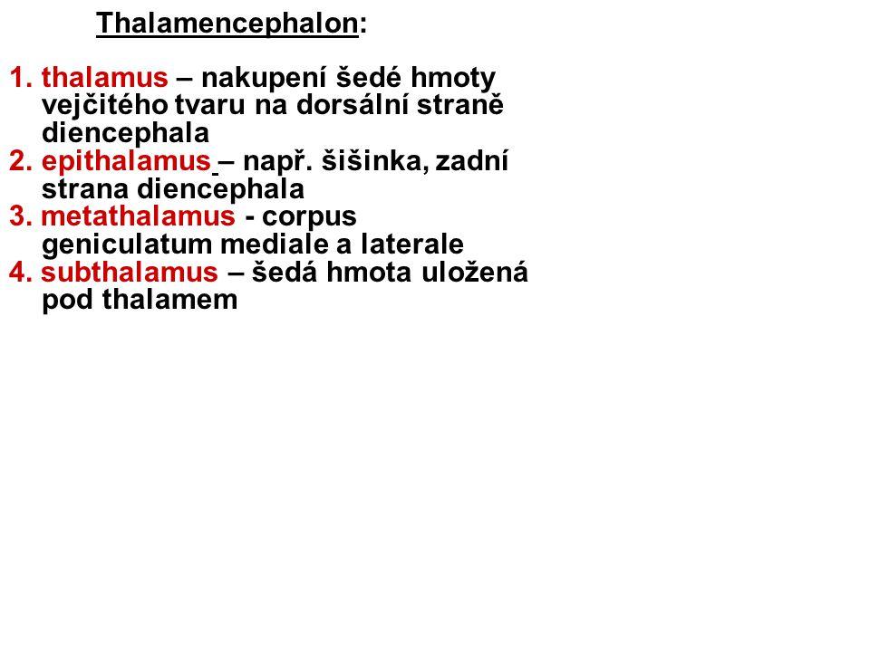 Thalamencephalon: 1.thalamus – nakupení šedé hmoty vejčitého tvaru na dorsální straně diencephala 2.epithalamus – např.