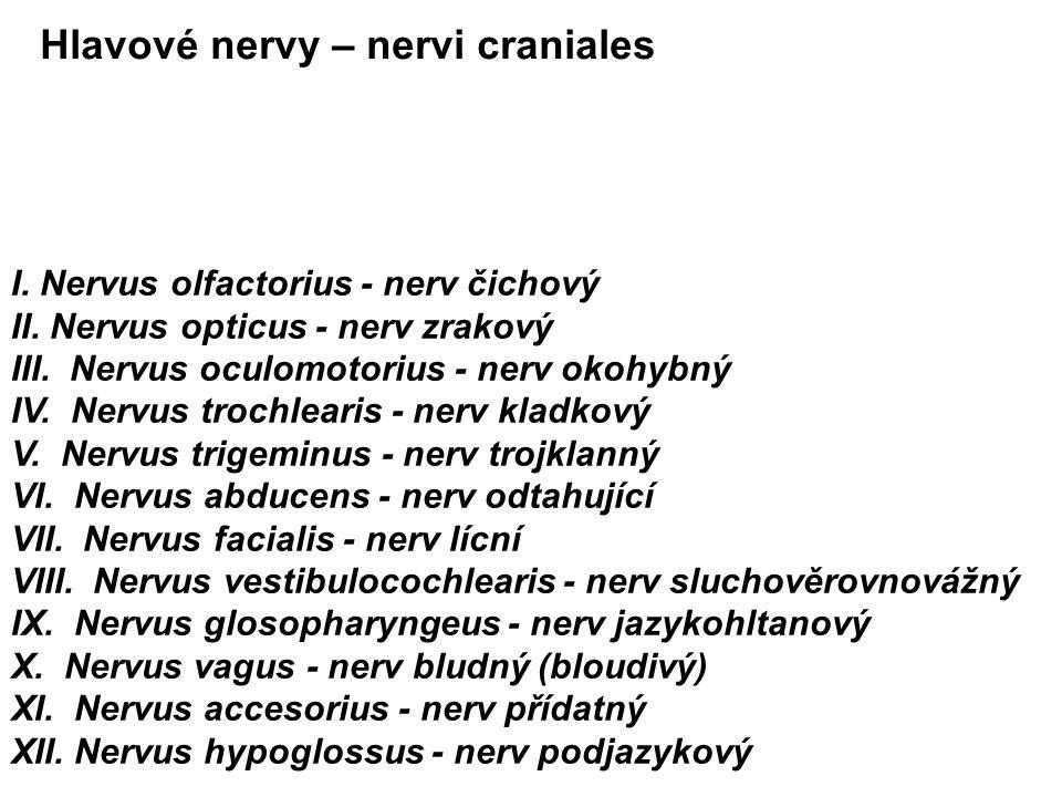I.Nervus olfactorius - nerv čichový II. Nervus opticus - nerv zrakový III.