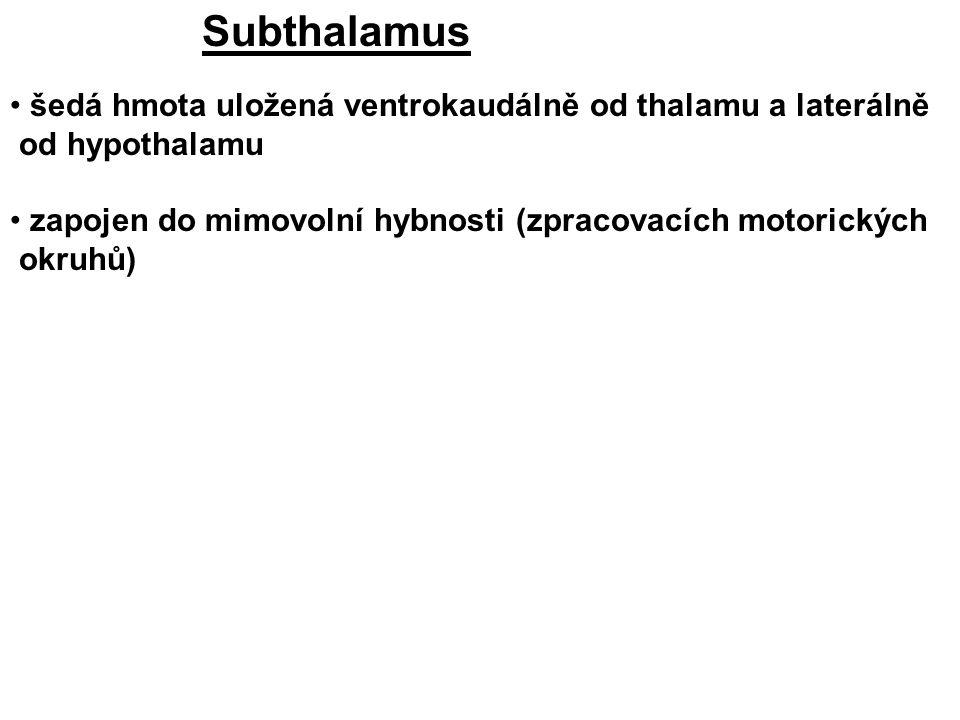 Subthalamus šedá hmota uložená ventrokaudálně od thalamu a laterálně od hypothalamu zapojen do mimovolní hybnosti (zpracovacích motorických okruhů)