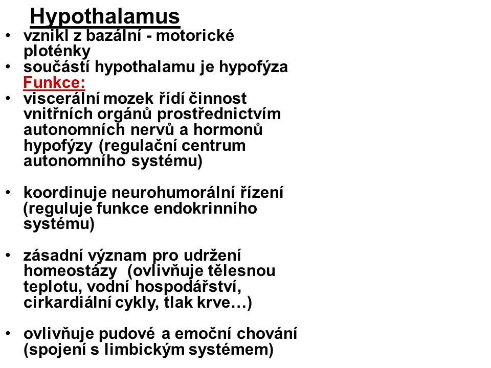Hypothalamus vznikl z bazální - motorické ploténky součástí hypothalamu je hypofýza Funkce: viscerální mozek řídí činnost vnitřních orgánů prostřednictvím autonomních nervů a hormonů hypofýzy (regulační centrum autonomního systému) koordinuje neurohumorální řízení (reguluje funkce endokrinního systému) zásadní význam pro udržení homeostázy (ovlivňuje tělesnou teplotu, vodní hospodářství, cirkardiální cykly, tlak krve…) ovlivňuje pudové a emoční chování (spojení s limbickým systémem)