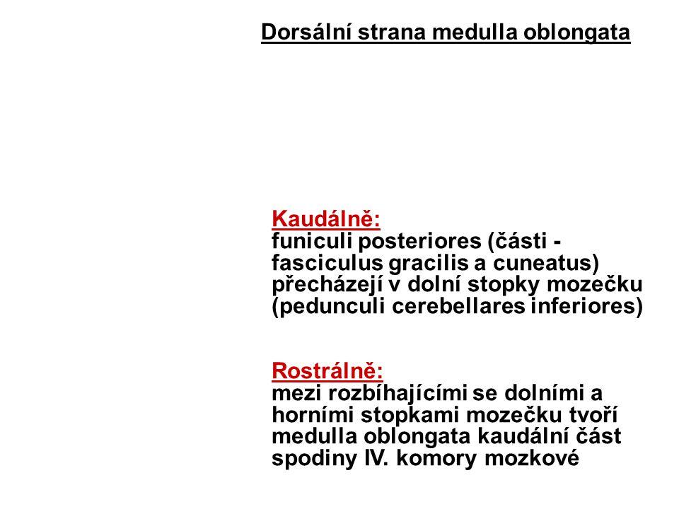 Kaudálně: funiculi posteriores (části - fasciculus gracilis a cuneatus) přecházejí v dolní stopky mozečku (pedunculi cerebellares inferiores) Rostrálně: mezi rozbíhajícími se dolními a horními stopkami mozečku tvoří medulla oblongata kaudální část spodiny IV.