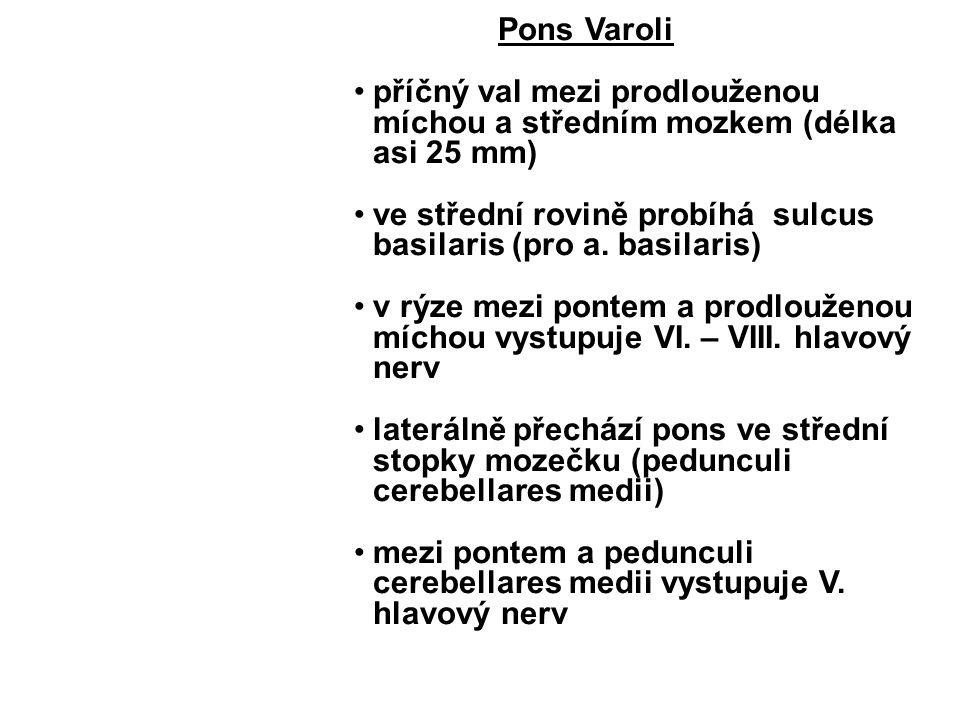 Pons Varoli příčný val mezi prodlouženou míchou a středním mozkem (délka asi 25 mm) ve střední rovině probíhá sulcus basilaris (pro a.